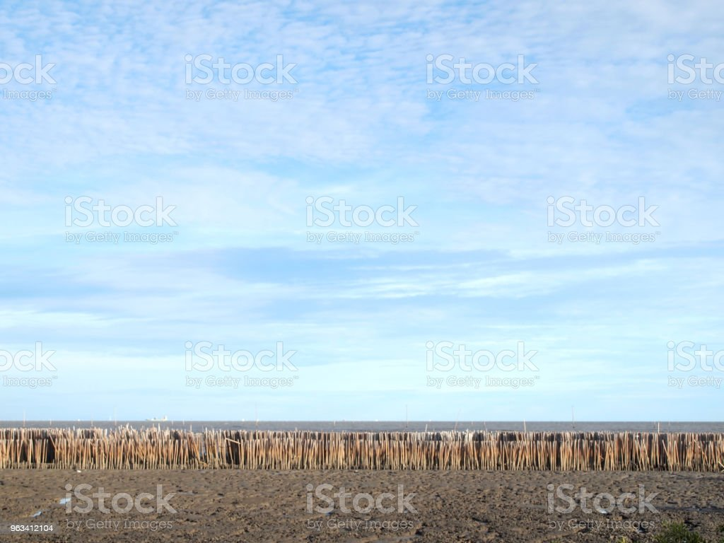 Ondes lentes de barrage en bambou - Photo de Arbre libre de droits