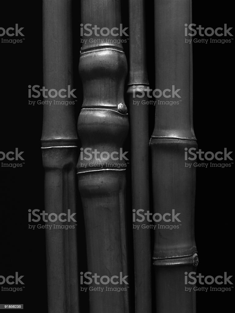 Bamboo Detail in Black and White stock photo