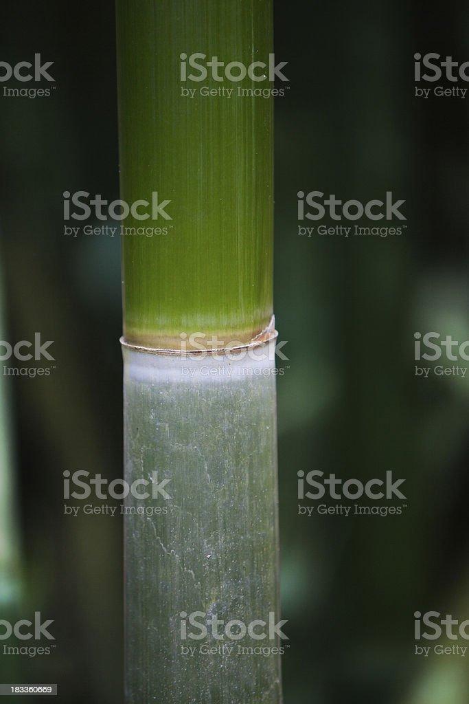 Bamboo Detail royalty-free stock photo