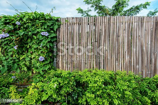 Bamboo fence copy space scene