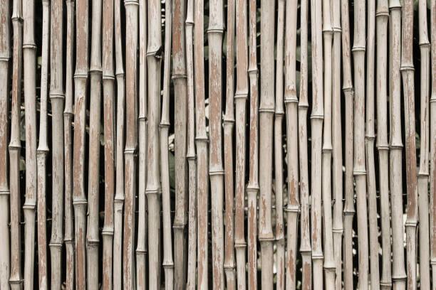 bambuszaun - stockwerke des waldes stock-fotos und bilder