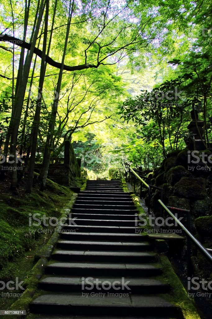 Bamboo Forest and stairs stock photo