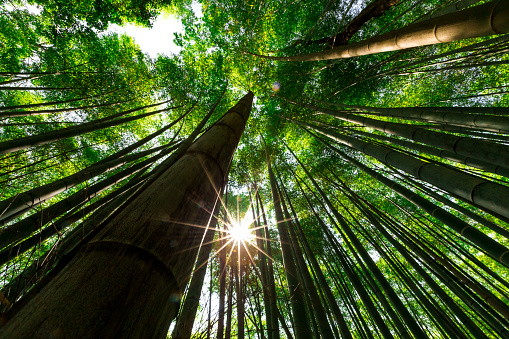 Arashiyama (嵐山 Storm Mountain) is a famous district outskirts of Kyoto, Japan. Very famous among the locals and tourists for its Path to Bamboo Forest.