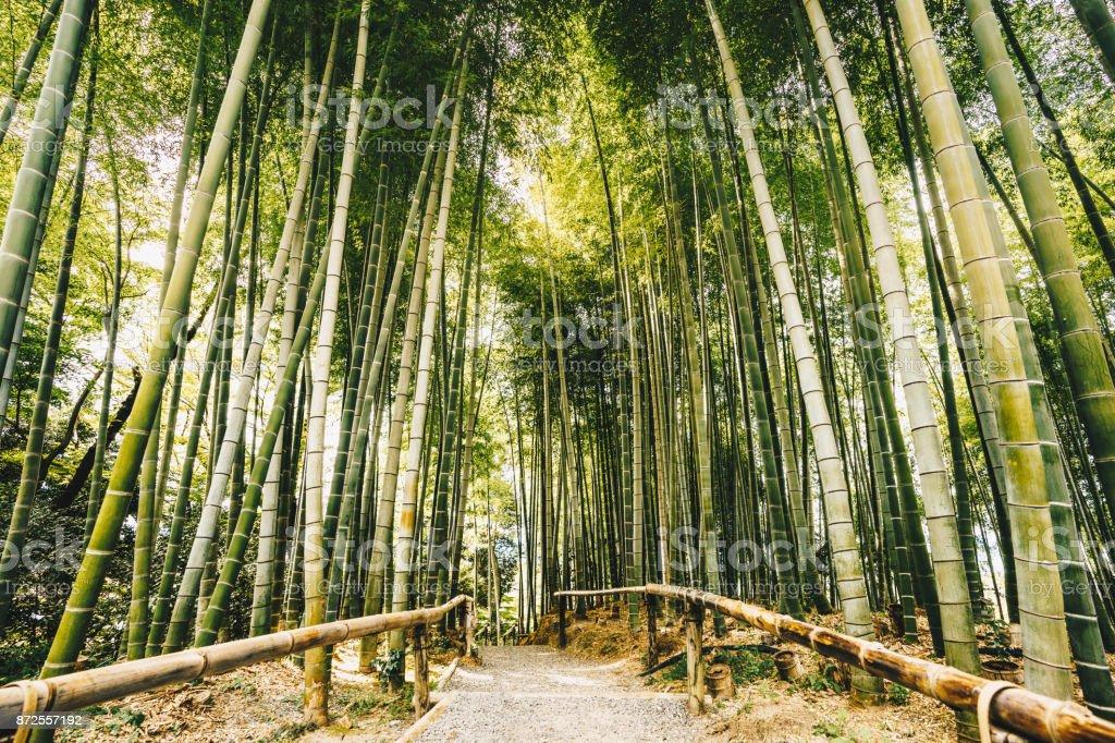 Bamboo forest Arashiyama near Kyoto, Japan stock photo