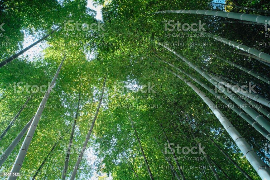 Bamboo Forest at Kodaiji Temple (Kodai-ji) stock photo