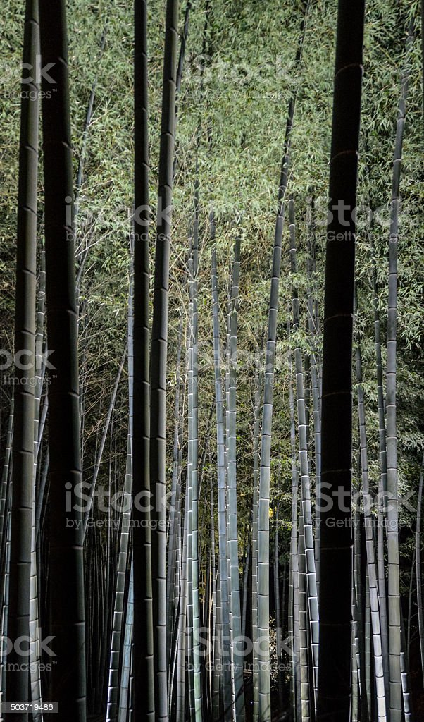 Bamboo forest at night background stock photo