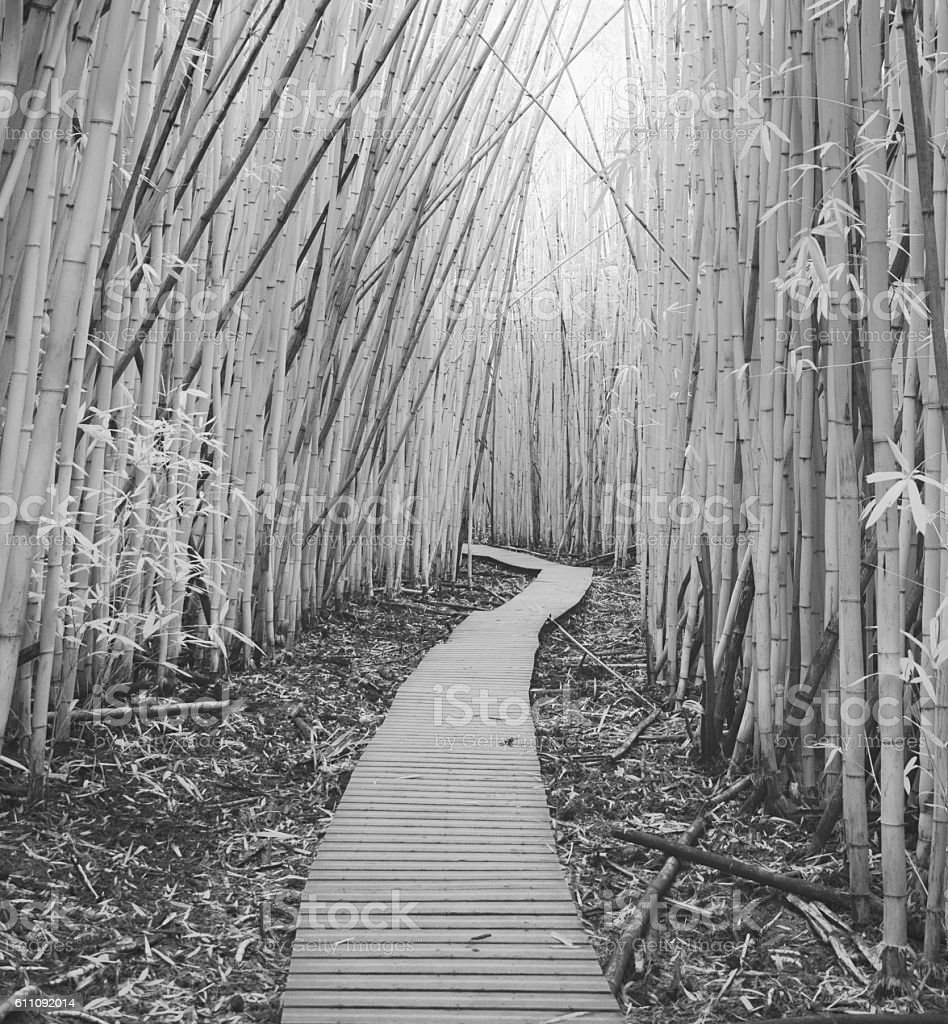Bamboo Forest Infrared stock photo