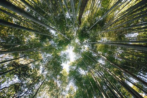 대나무 숲은 아라시 야 마 교토 일본에에서 있는 대나무의 자연의 숲 이다 계단 및 층계에 대한 스톡 사진 및 기타 이미지