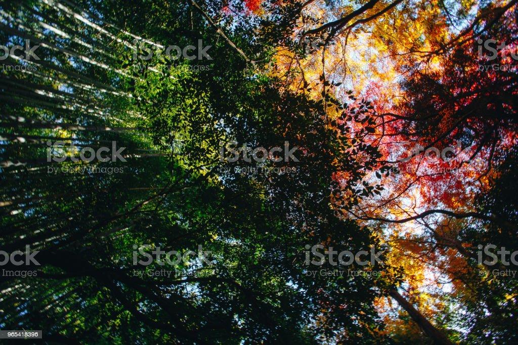 竹林是位於日本京都嵐山的一座天然竹子林。 - 免版稅亞洲圖庫照片