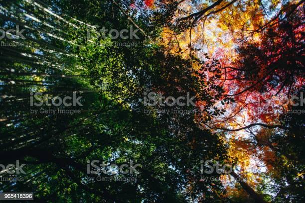 Bambuswald Ist Ein Natürlicher Wald Von Bambus Befindet Sich In Arashiyama Kyoto Japan Stockfoto und mehr Bilder von Arashiyama
