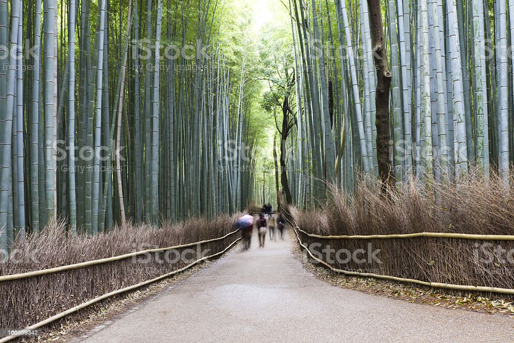 Bamboo Forest, Kyoto, Japan royalty-free stock photo