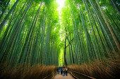 A walk through the Bamboo Forest of Arashiyama, Kyoto Japan