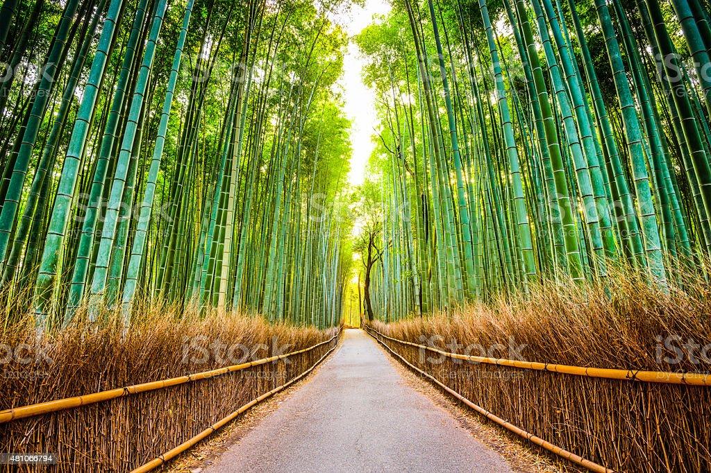 京都の竹林 - 2015年のロイヤリティフリーストックフォト