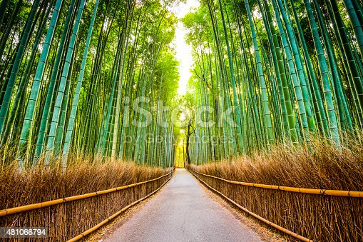 istock Bamboo Forest of Kyoto 481066794