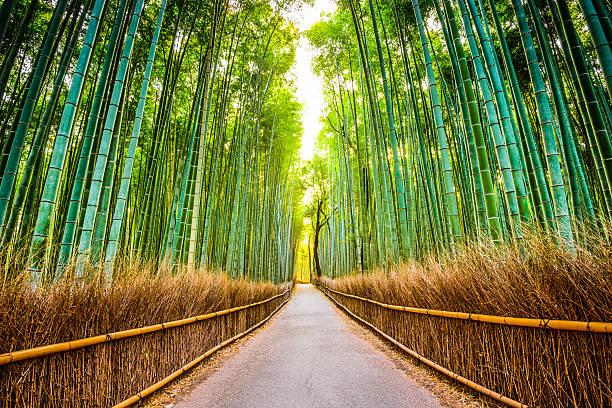 bosque de bambú de kioto - kyoto fotografías e imágenes de stock
