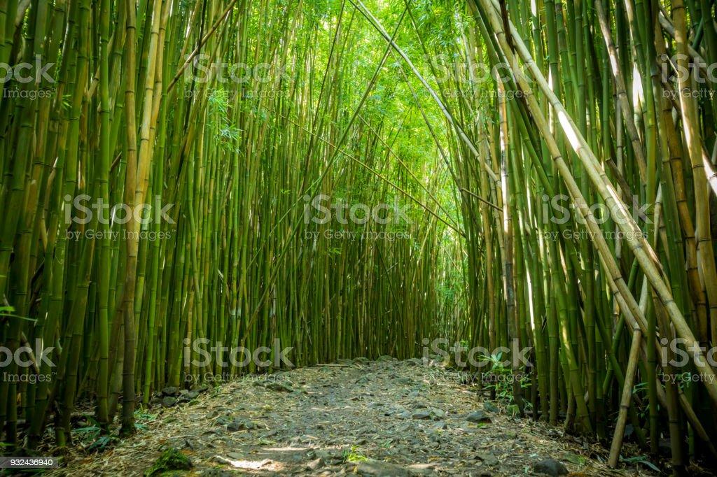 Bambuswald Auf Maui Stock Fotografie Und Mehr Bilder Von Abenteuer