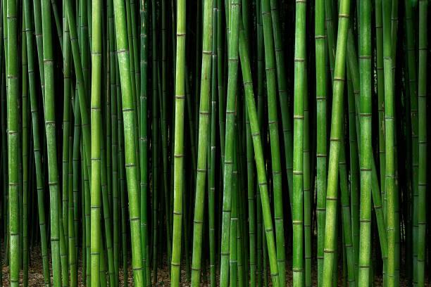patrón de bosque de bambú - foto de stock