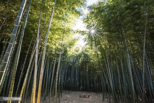 부산 기장군의 아홉산의 빽빽한 대나무숲에 깃든 햇살
