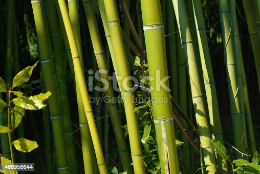 Bamboo Forest Stock Photo & More Pictures of 2015
