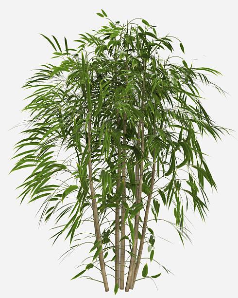 Forêt de bambous - Photo