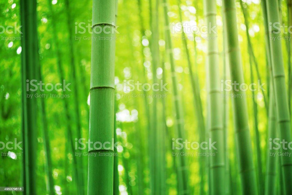 Las bambusowy – zdjęcie