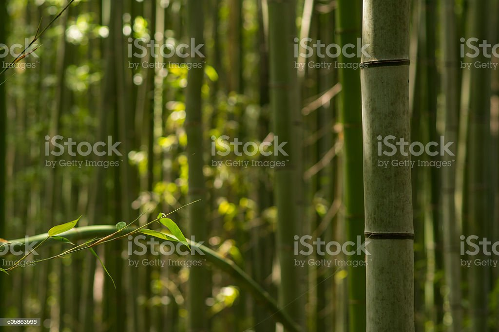 Bamboo Forest - Royalty-free Arashiyama Stock Photo