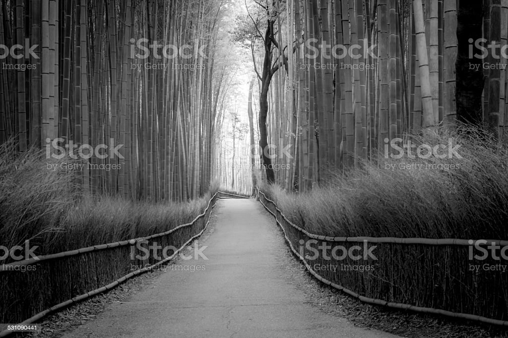 Bambu forest stock photo