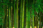 istock bamboo forest 534456534