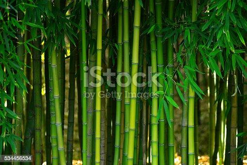 green bamboo stem in a japanese garden