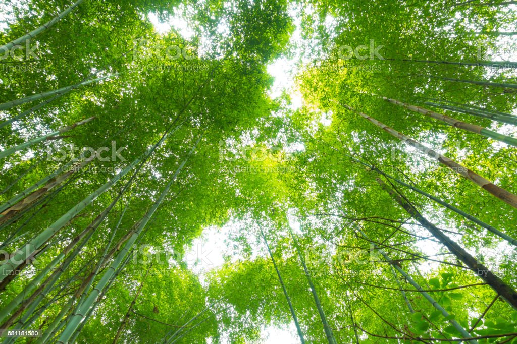 Bamboo forest foto stock royalty-free