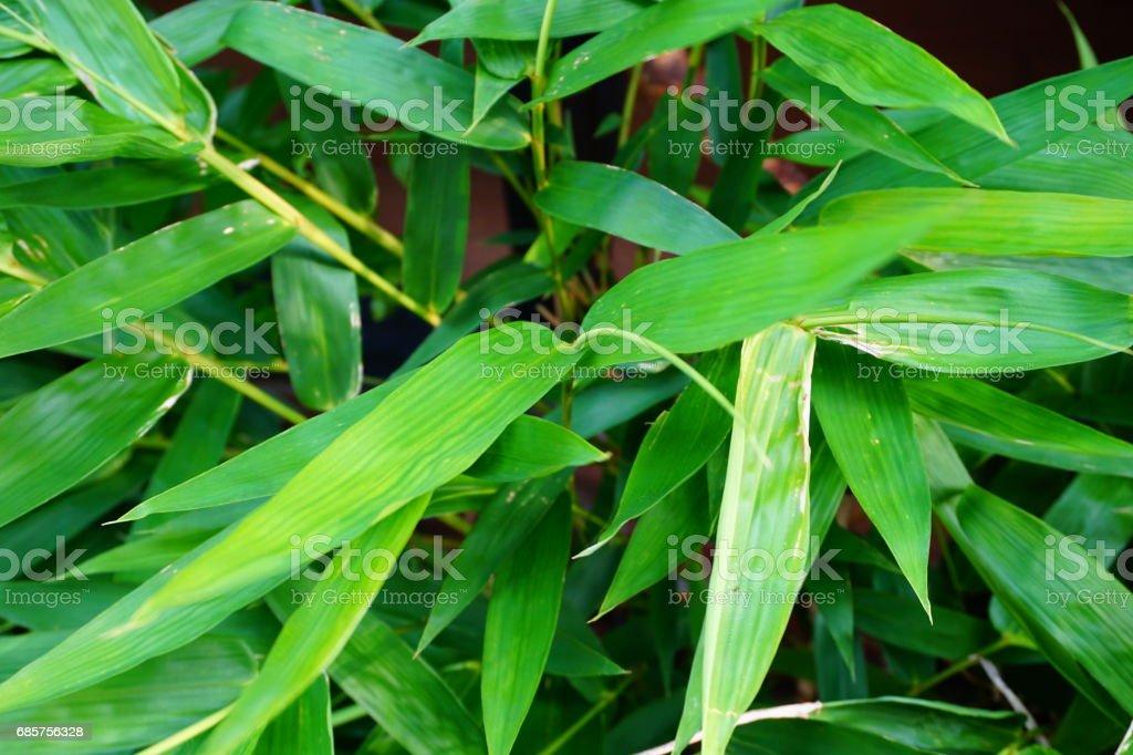 Bamboo forest zbiór zdjęć royalty-free