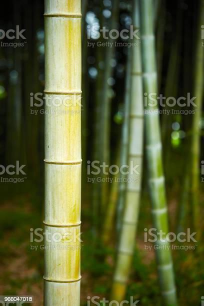 Бамбуковый Лес — стоковые фотографии и другие картинки Бамбук