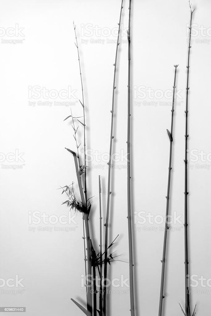 Bamboo forest take multiple exposure stock photo