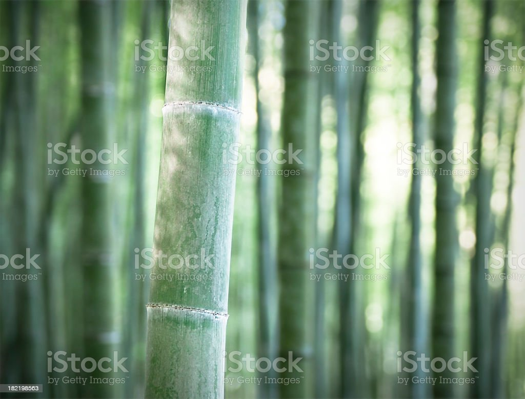 Bamboo Forest Tranquility royalty-free stock photo