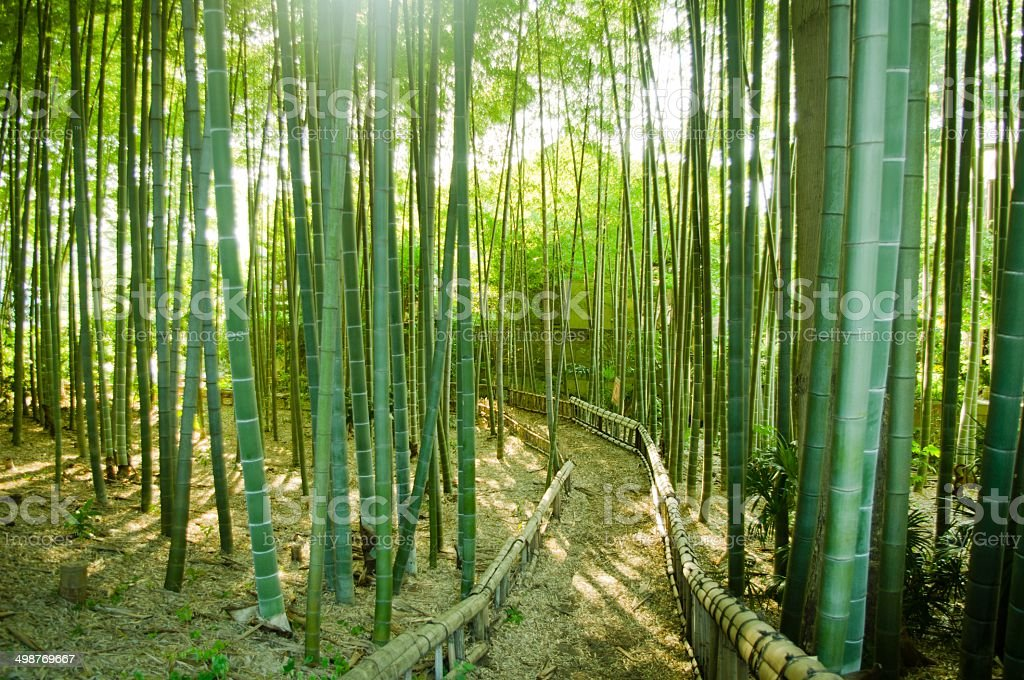 Bamboo Forest Way stock photo