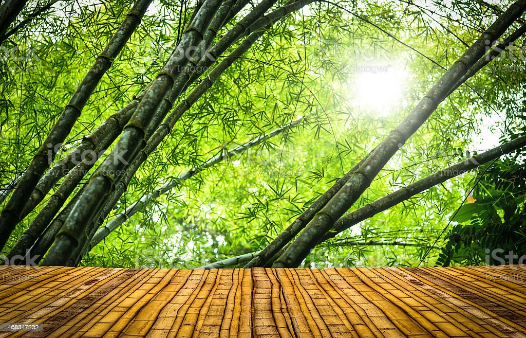 Bamboo forest with a floor royalty-free stock photo