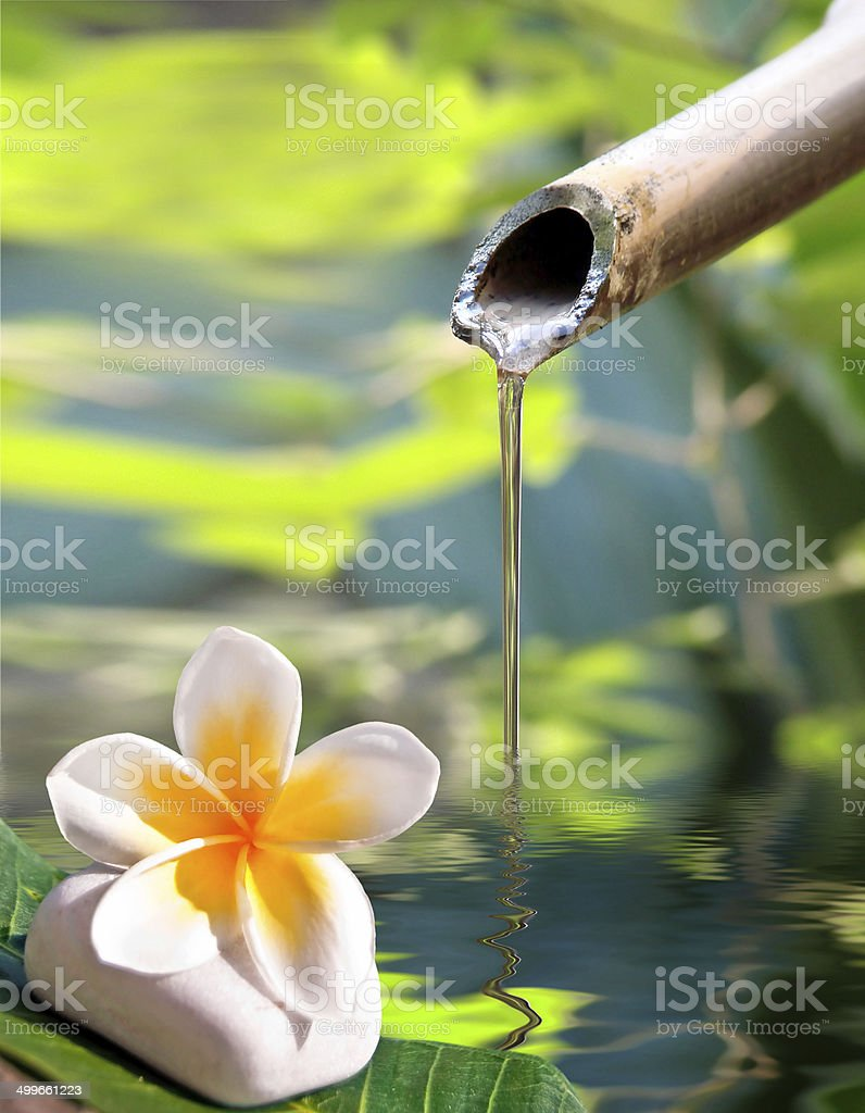 Bamboo fountain and frangipani flower stock photo