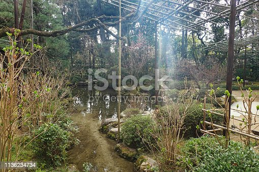 istock bamboo framework in a park 1136234734