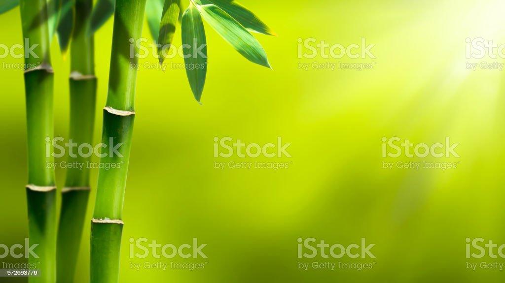 Bambus Garten Abstrakten Hintergrund Stockfoto und mehr ...
