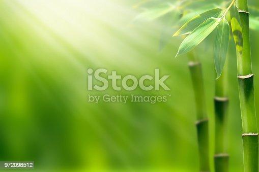 istock bamboo garden background 972098512