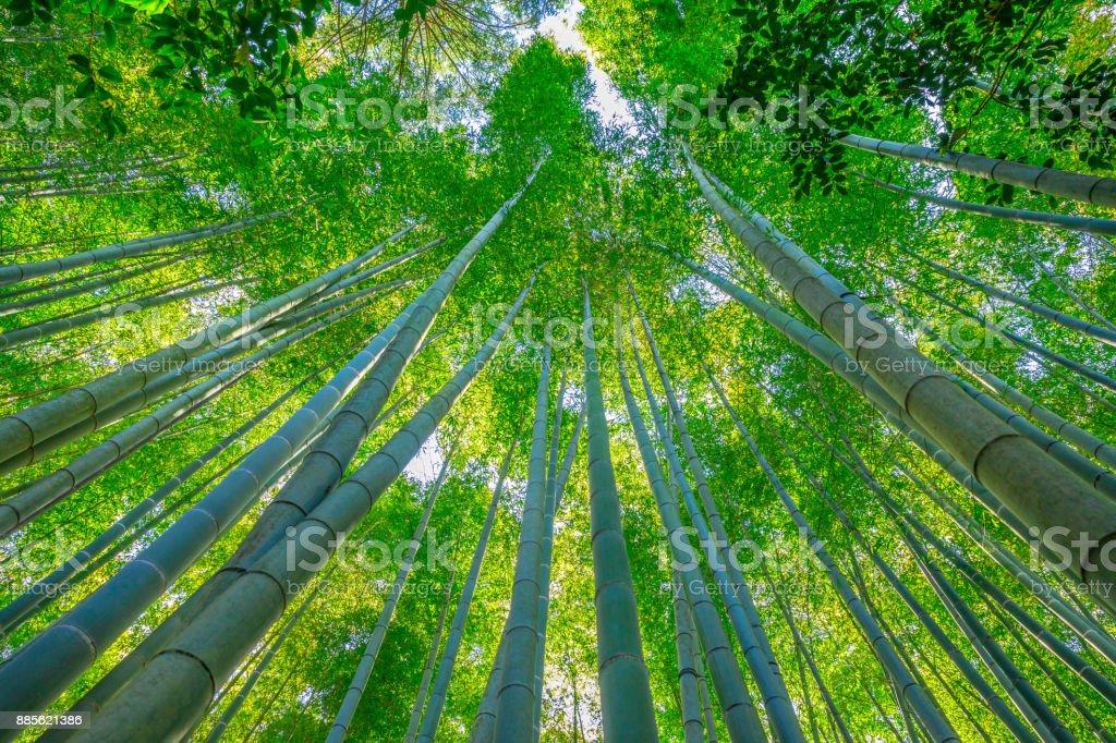 Bamboo garden grove stock photo