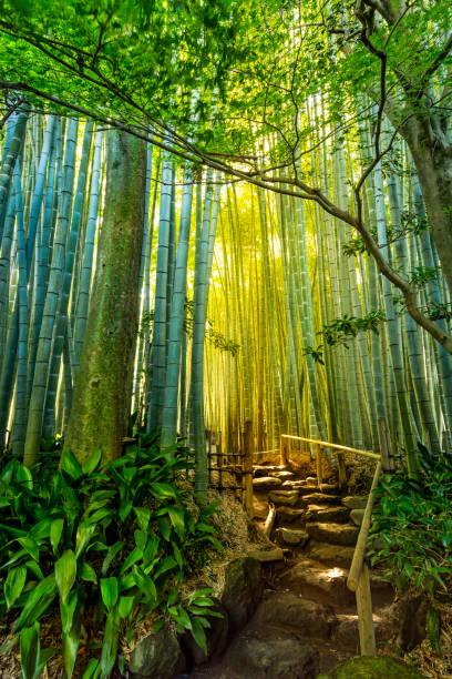 bamboo garden - prefektura kanagawa zdjęcia i obrazy z banku zdjęć