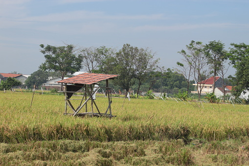 bamboo gazebo serves as a shade for farmers to protect plants from bird pests