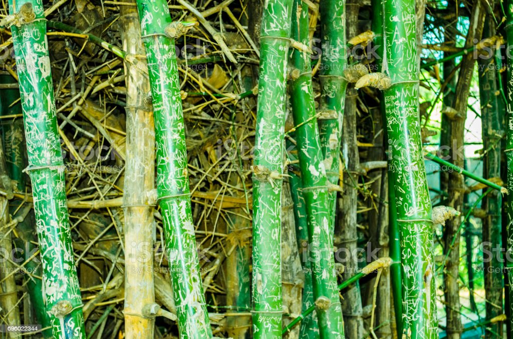 Bamboo Grafitti stock photo