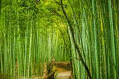 Bamboo groove forest in Arashiyama Japan