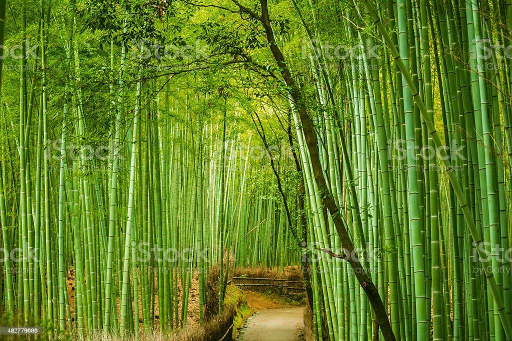groove Arashiyama foresta di bambù in Giappone - foto stock