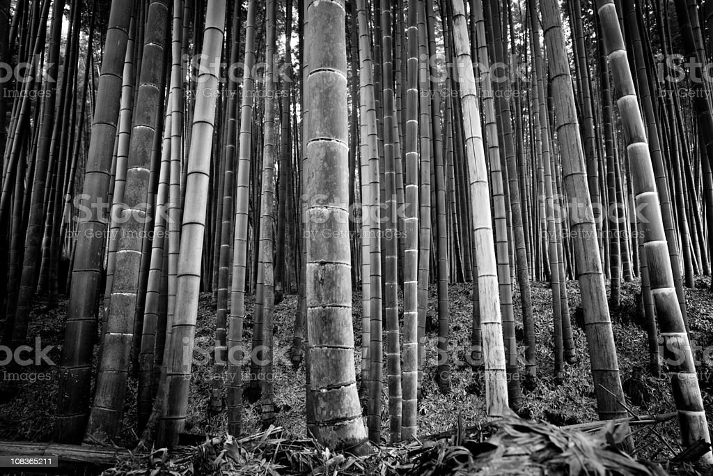 Bamboo Grove Arashiyama Kyoto stock photo