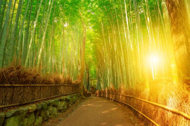 京都嵐山の竹林 - 名所旧跡 ストックフォトと画像