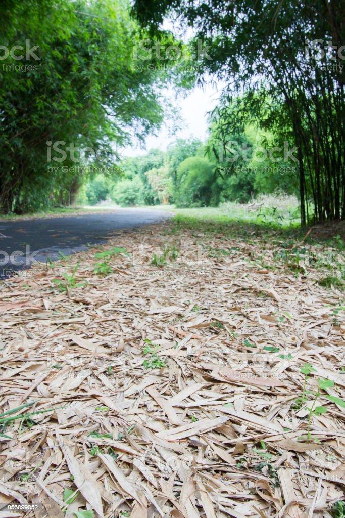 Bamboo grove at Phutthamonthon,Nakhon Pathom Province of Thailand stock photo
