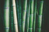 istock bamboo grove background 1197274408